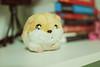 little hamster ♥ (Natália Viana) Tags: cute boyfriend amor hamster fofo presente pelúcia namorado bichinho roedor littlehamster natáliaviana renanviana