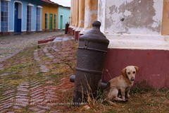 Trinidad, sad street dog (blauepics) Tags: world poverty road street city travel dog house building heritage rain animal architecture america canon dark island sadness reisen republic sad strasse country cuba colonial nation central style haus ciudad republik unesco communist perro triste spanish hund stadt latin trinidad land architektur estilo caribbean cuban amerika americas gebude regen dunkel kuba tier weltkulturerbe the karibik kolonial kanone stil traurig streetdog armut lateinamerika strassenhund traurigkeit spanischer tristesa mittelamerika kubanische