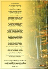 Herbst des Lebens /  Autumn of life (Martin Volpert) Tags: christ god faith herbst bible christianity bibel biblia gott glaube bijbel glauben christentum jesuschristus bibelvers  autumnoflife bibelverskarte mavo43 herbstdeslebens