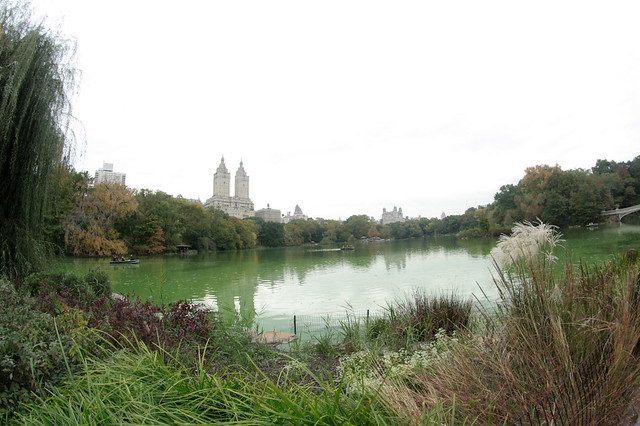 NEW YORK 450