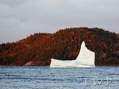 Defying the Inevitable (WanderWorks) Tags: ocean autumn trees canada ice berg newfoundland evening labrador hill floating shore iceberg eisberg     toppurinn dsc4591rc1fgm