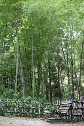 竹林のある風景 / Forest of the bamboo