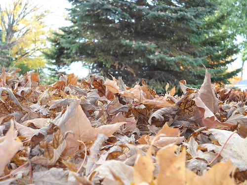 crunchy leaves! by mmwitch