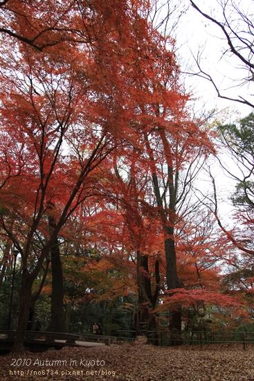 20101207_KyotoWithMoFei_1156 f