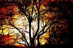 L'arbre allum... (Diegojack) Tags: lumire coucher ombres