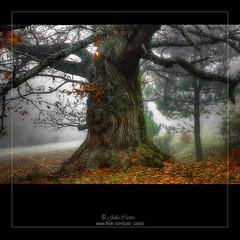 El viejo árbol (Julio_Castro) Tags: autumn trees mountain field nikon árboles branches nikond70s campo otoño montaña ramas olétusfotos