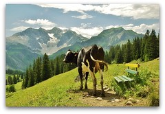 outlook with cow (rafischatz) Tags: trees sky mountain alps nature animal clouds bench landscape austria cow pentax lechtal bregenzerwald k200d mygearandme mygearandmepremium mygearandmebronze