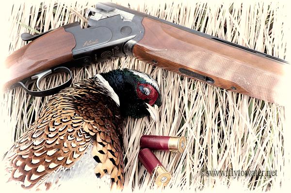 Wild Ringneck & Beretta 686 Onyx O/U