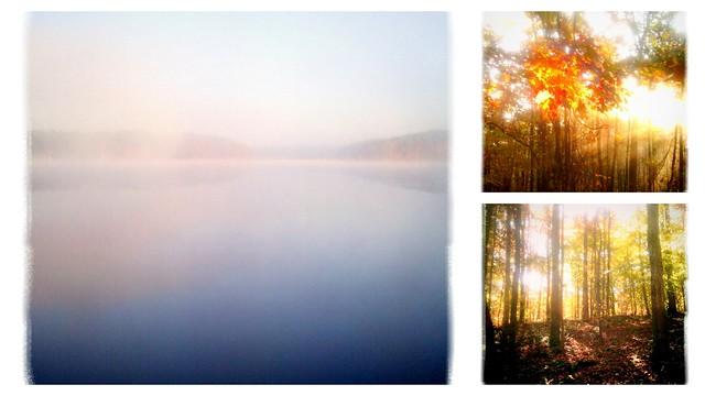 lake, trees, light