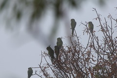 """Parrots • <a style=""""font-size:0.8em;"""" href=""""http://www.flickr.com/photos/62826658@N06/6345136980/"""" target=""""_blank"""">View on Flickr</a>"""