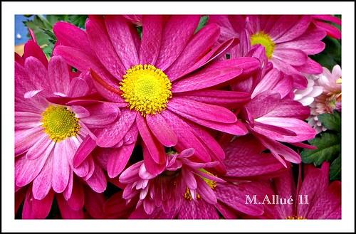 Flores by Miguel Allué Aguilar