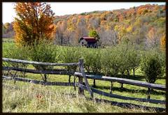HFF--Explore  11-18-11 (cscott_va.) Tags: barn virginia explore fall2010