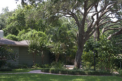 tree-service-landscape-maintenance-sarasota-venice-bradenton-florida-6 (Quality Tree Service of Sarasota) Tags: venice plant tree landscape concrete design dangerous oak florida crane landscaping quality lawn large commercial repair installation maintenance hauling cutting service sarasota walls trimming removal residential privacy condominium planting sod pruning osprey mulch sprinklers removals nokomis fertilization