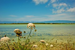 Pond (fiammetta53) Tags: pond sardinia picnik putzuidu fiammetta53