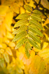 Green Survivor (Kurayba) Tags: park autumn shadow canada color colour green fall colors leaves yellow creek leaf colours edmonton pentax bokeh f14 alberta da ravine 55 isolated position survivor k5 whitemud twotoned fittest smcpda55mmf14sdm