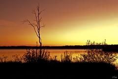 Golden View (Eduards Pulks) Tags: autumn sunset lake color tree canon latvia reflection4 baltezers 60d doubleniceshot tripleniceshot artistoftheyearlevel3 artistoftheyearlevel4 flickrstruereflection1 flickrstruereflection2 flickrstruereflection3 flickrstruereflection4 flickrstrue epulks epulksphotography