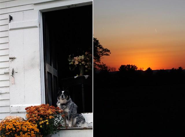 mums_nea_sunset