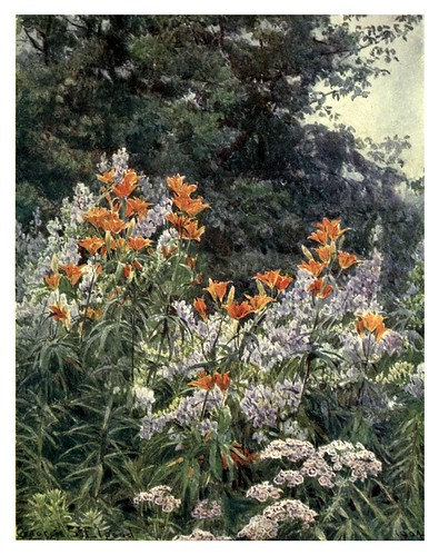 002-Lirio naranja y aconito-The garden that I love-1906-George S. Elgood
