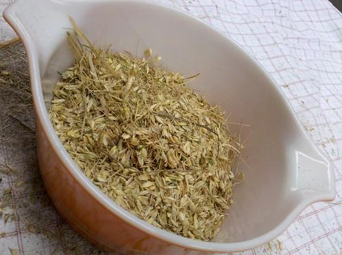 Wheat 11