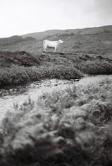 river (Timoleon Vieta II) Tags: portrait bw river landscape cow isleofskye bokeh existence timoleon