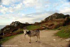 Burro en Cabo Home (Rodeiramar2A) Tags: burro cabohome donón ofacho