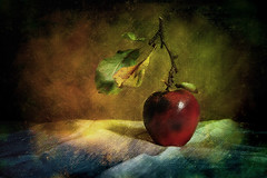 Without Title (Arunas S) Tags: autumn stilllife texture apple stillleben background stilleven stilleben baltic retro lithuania naturemorte  naturamorta naturalezamuerta lietuva palanga  stonetable naturezamorta   martwanatura asetelma withouttitle natiurmortas natrmort klusdaba pipexcellence etamvitae