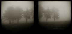 There was a time (efo) Tags: trees bw fog diptych elcerrito multiframe incamera 24x24mm zeissikontenax