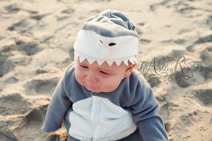 Shark5web