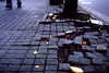 石畳の隆起