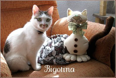 Bigotina - blog