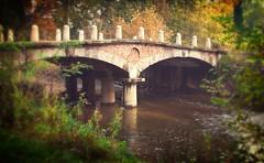 Il ponte delle catene - Parco di Monza (Ennio66) Tags: park autumn trees parco foglie alberi path autunno natures monza ottobre parcodimonza pontedellecatene