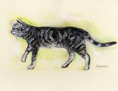 Walking cat (Maruhikaru) Tags: cat walking colored acrylic paintswater pencilmaru cat