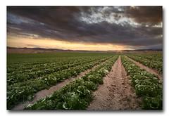 (jose.singla) Tags: sky españa sun color sol clouds canon landscape atardecer sigma paisaje murcia cielo nubes 1020 caravacadelacruz 50d plantación lechugas josesingla joseantoniogimenez