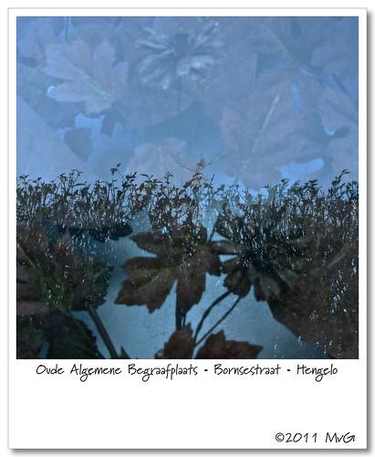 Oude Algemene Begraafplaats • Bornsestraat • Hengelo by Marcel van Gunst