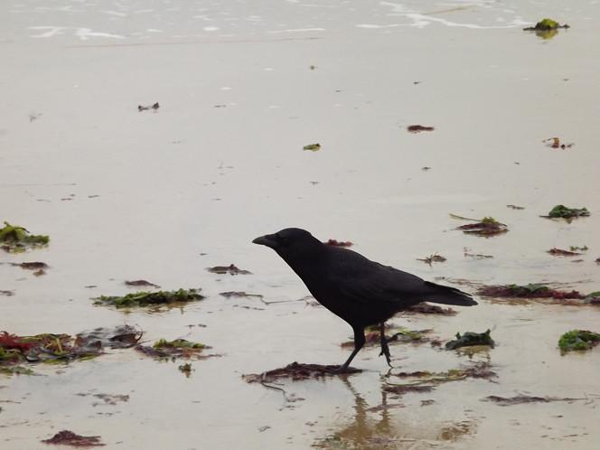 Bird_sand
