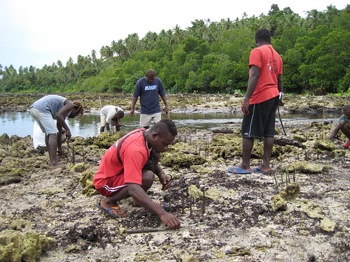 Planting mangroves, Western Province, Solomon Islands. Photo by Anne-Marie Schwarz, 2008