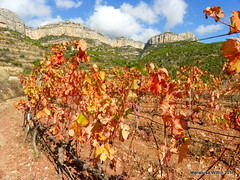 Montsant (Marlis1) Tags: mountains spain catalonia berge vineyards catalunya priorat montsant montes weingebiet marlis1 rebberge gettyimagesiberiaq3 a2fp