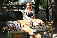 Argentina (rockcompany) Tags: argentina tiger tigre