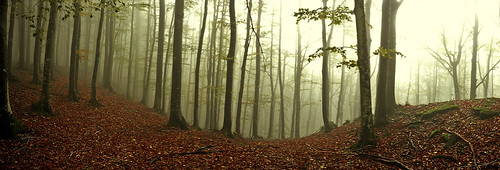 Panoramic Fog (for Samsung Challenge) by David Butali (Dylan@66)