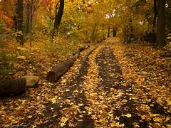 Autumn Tracks (CVerwaal) Tags: nyc newyorkcity autumn newyork fall colors pen centralpark olympus autumncolors northwoods autumninnewyork olympusep2 lumix14mmf25