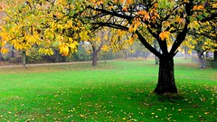 (c) Florette Hill: Leaves left (© the-best-is-yet-to-come ©) Tags: nature natureza naturesfinest blinkagain bestofblinkwinners artistoftheyearlevel2 bewiahn