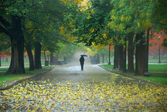 Boston Common (amythyst_lake) Tags: autumn trees fall leaves rain umbrella path figure bostoncommon