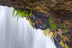Day 674 - Behind the water wall (greygirl25) Tags: waterfall pacificnorthwest ferns cascademountains upperbuttecreekfalls