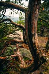 (Alek S.) Tags: statepark park trees tree nature wisconsin woods forrest bark backcountry devilslake publicpark