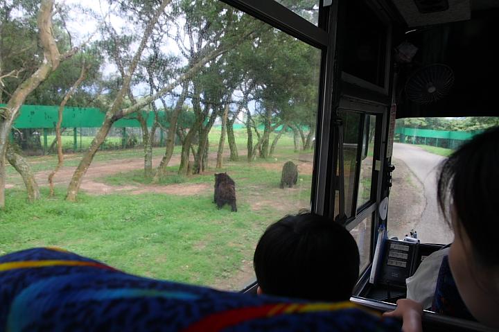 六福村動物園026