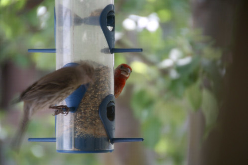 192-peek a boo bird