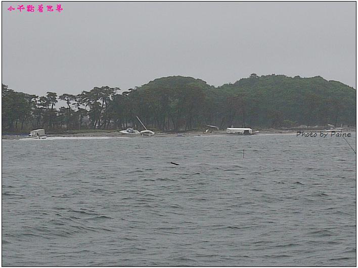 仙台松島遊船餵海鷗-34.jpg