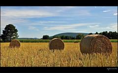 Rundball (Excalibur67) Tags: nature landscape nikon alsace paysage d90 vosgesdunord