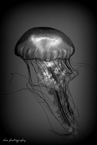 B&W Jelly Floating by astrogrl