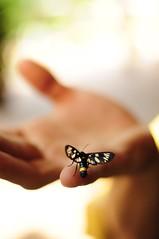 weird ''bugg'' butterfly (shpiksi) Tags: butterfly luan kotori shpixi shpiksi